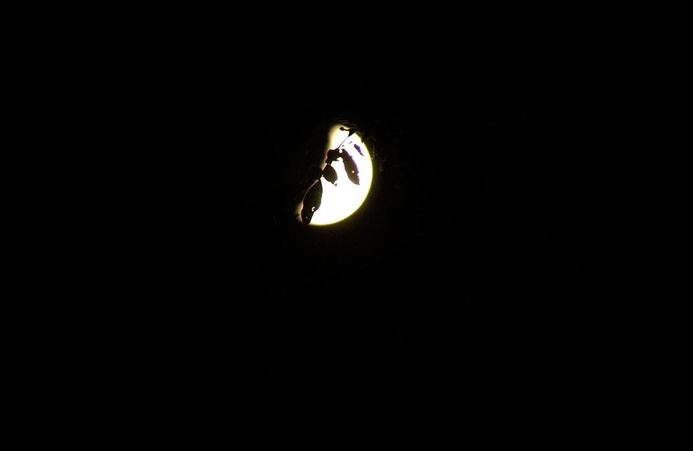 100103 leaf moon