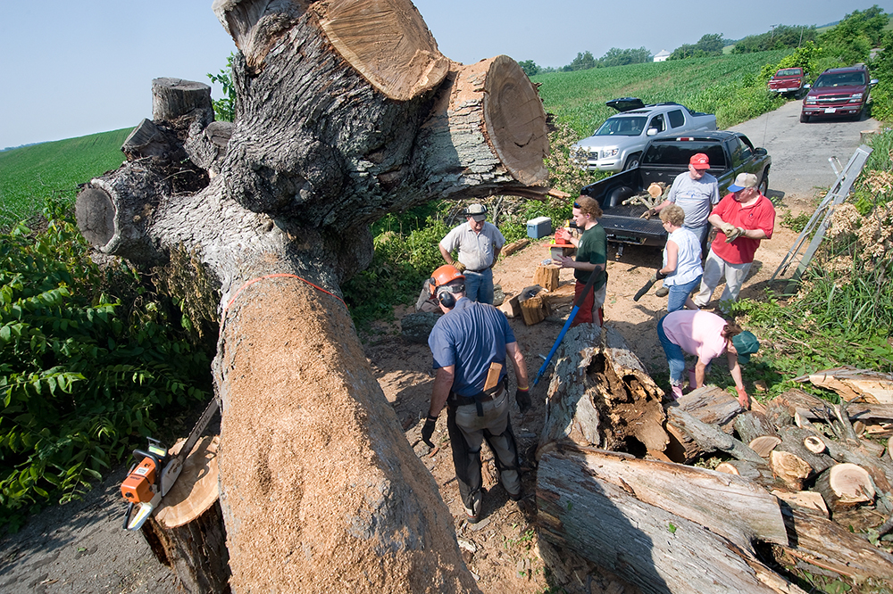 Prayer Tree Cutting